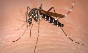 Casos de dengue bajaron un 46% en 2012