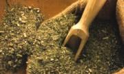 Descubren nuevos beneficios de la yerba mate
