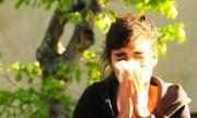 Alergias: una web muestra el nivel de polen