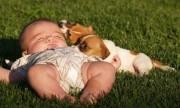 Las mascotas protegen a los bebés de resfriados y alergias
