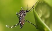 Los pequeños insectos pueden ser grandes amenazas