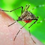 Recomiendan no automedicarse ante los primeros síntomas del dengue