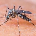 Luz verde a primera vacuna contra dengue